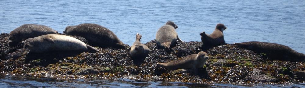 seal-island